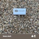 Iowa Jack